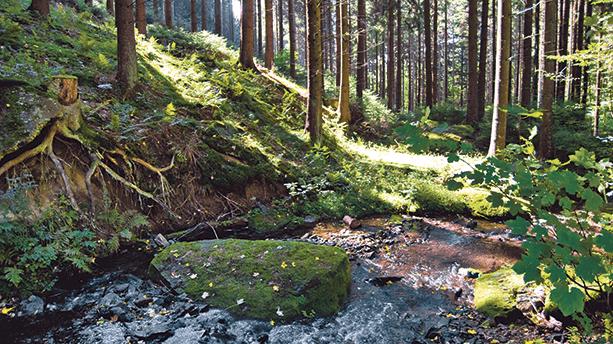 Auf der Sauerland-Waldroute