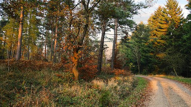 Durch den Hürtgenwald