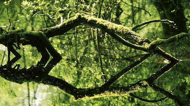 Der Birgeler Urwald