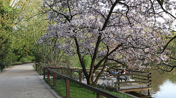 Botanischer Garten Rombergpark, Dortmund