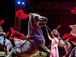 Circus Charles Knie in Bielefeld