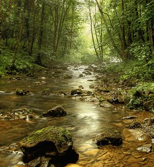 Auf der Waldroute durch das Hönnetal
